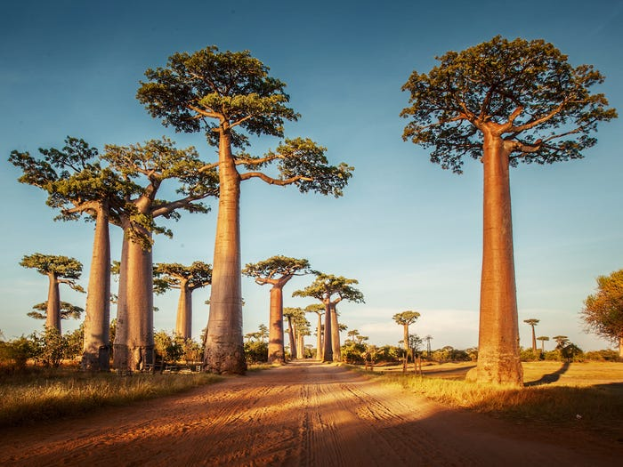 Fun and Fascinating facts about Madagascar